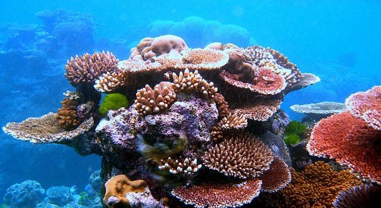 Great Barrer Reef