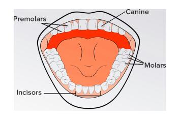 Types of teeths